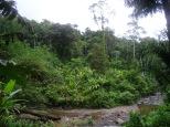 Zufluss des Rio Teribe