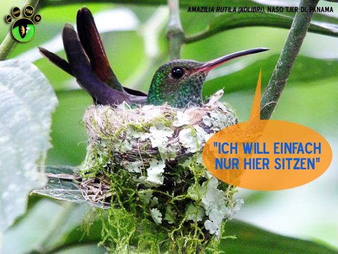 Postkarten zur Petition «Naso Tjerdi»