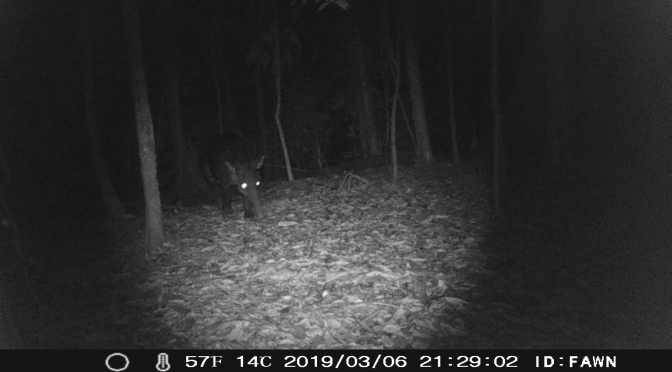 "Publikation zur Tapirforschung in Bearbeitung – ""Occurrence of Tapirus Bairdi in the settlement area of the indigenious tribe Naso along the River Teribe in Bocas del Toro, Panama"""